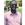 Nicholas Kyeremeh