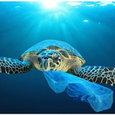 Icon for Plastics and Our Oceans (Borrowman_LM_FA19)